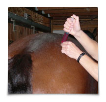 Heart Equine - Aqua Acupuncture with B12