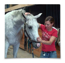 Heart Equine - Mobilization of the Poll