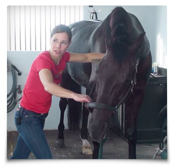 Heart Equine - Chiropractic Neck Adjustment - Lower Cervicals