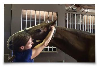 Heart Equine - Chiropractic Neck Extension