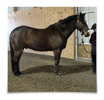 Heart Equine - Post-Adjustment Posture