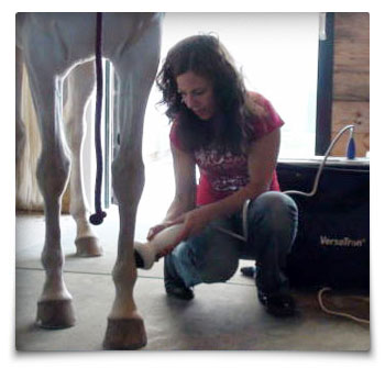 Heart Equine - Shockwave Therapy